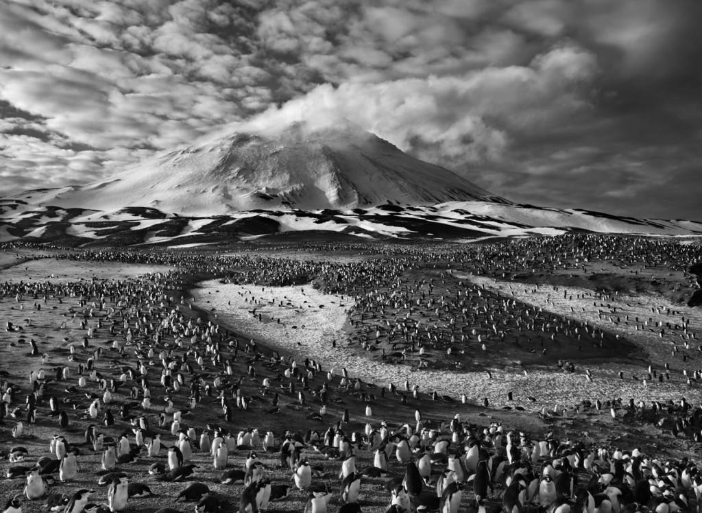 Znalezione obrazy dla zapytania Le sel de la terre