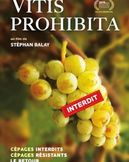 Vitis prohibita - la critique du film